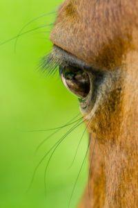Kurs Faszination Pferd